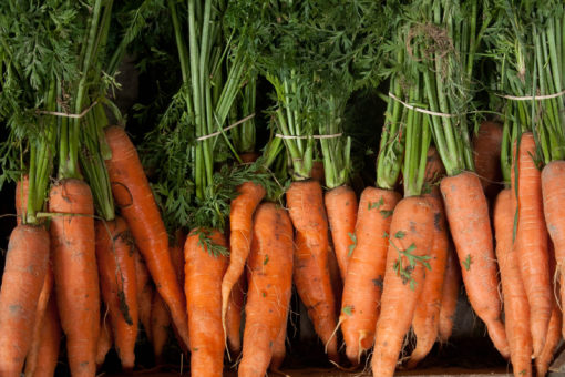 Fresh local bunches of carrots