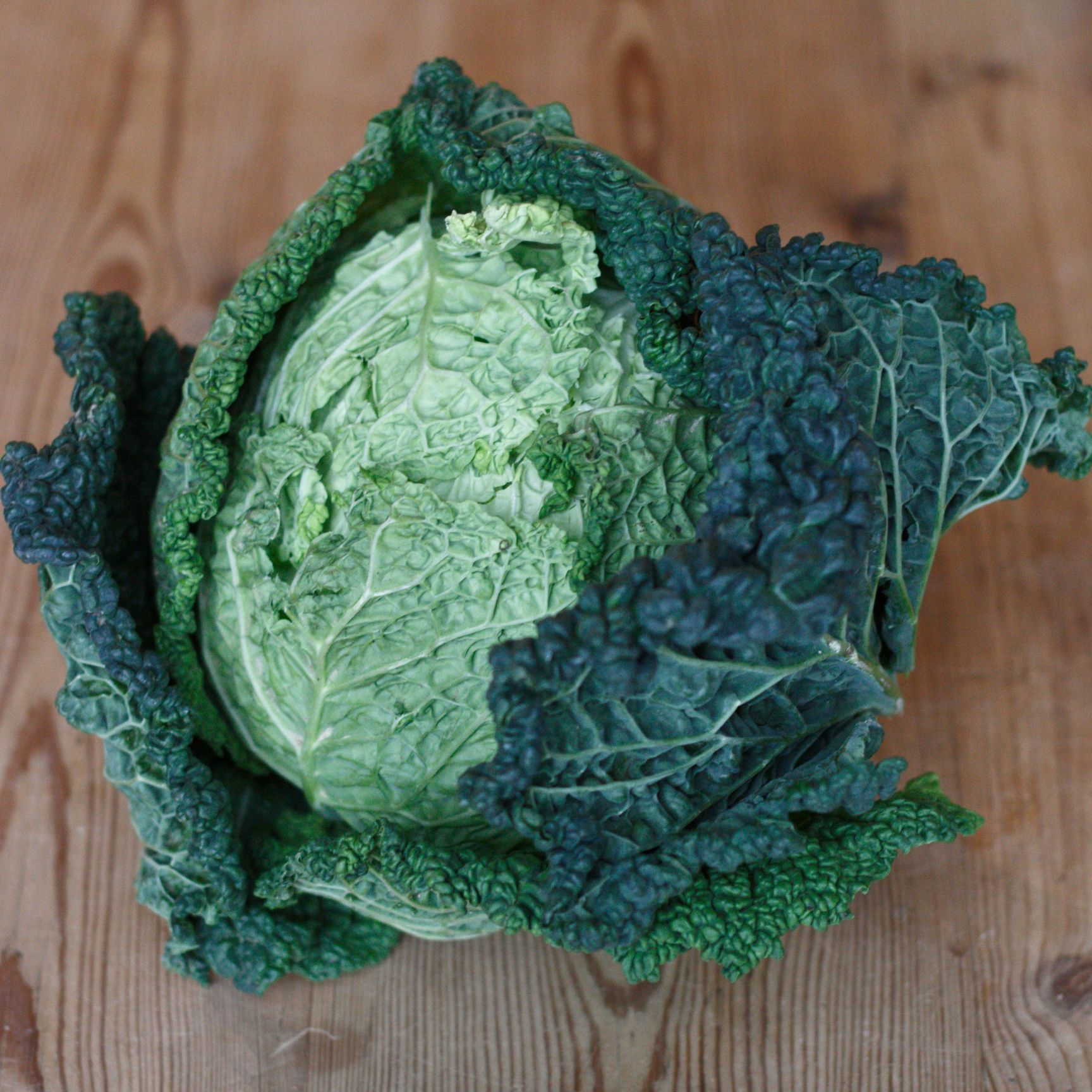 Savoy Cabbage The Goods Shed