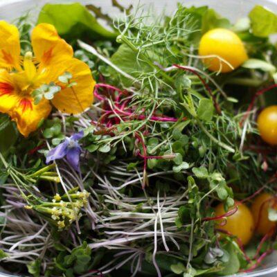Rebel Farmer Micro Salad